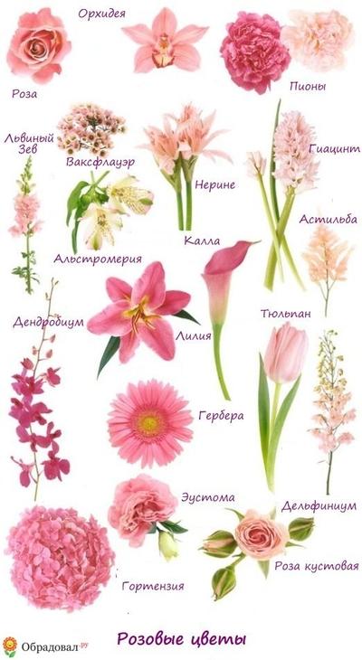 Цветы каллы фото букет
